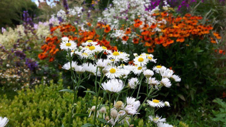 border kleur en beplantingsplan