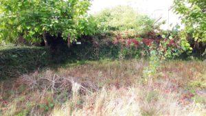 onkruid tuin wijkkamer leusden