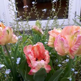 Welke bloembollen ga jij kiezen?