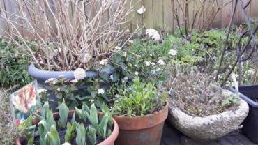 5  Planten om je winterpotten mee te vullen.