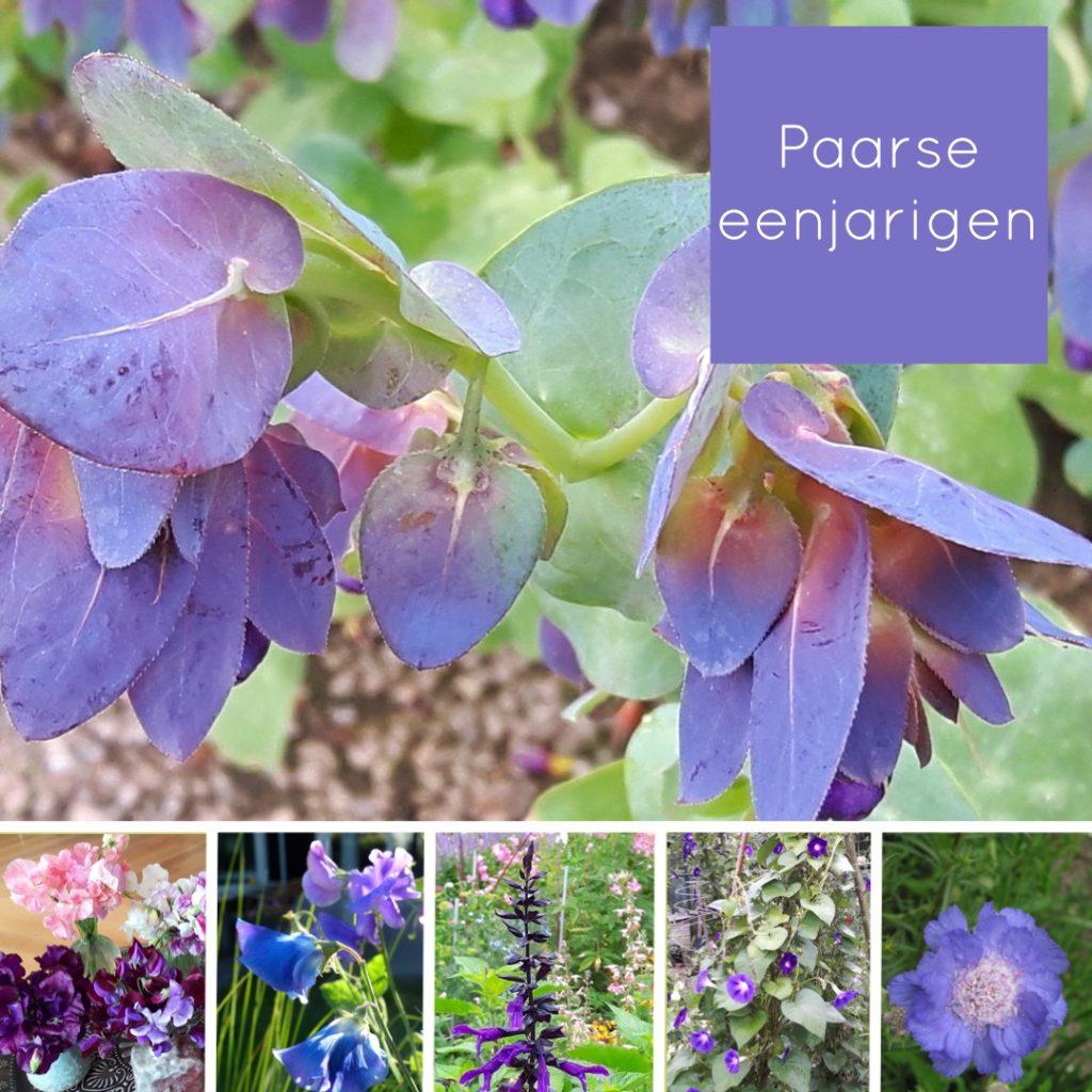 plukbloemen paars