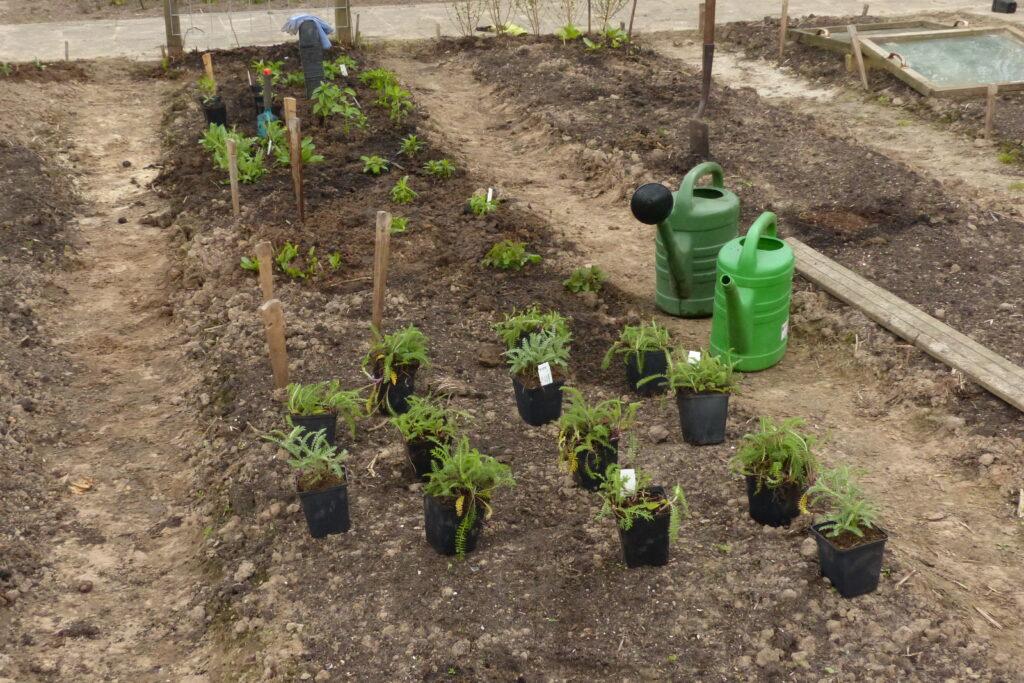 uitzetten plantenborder
