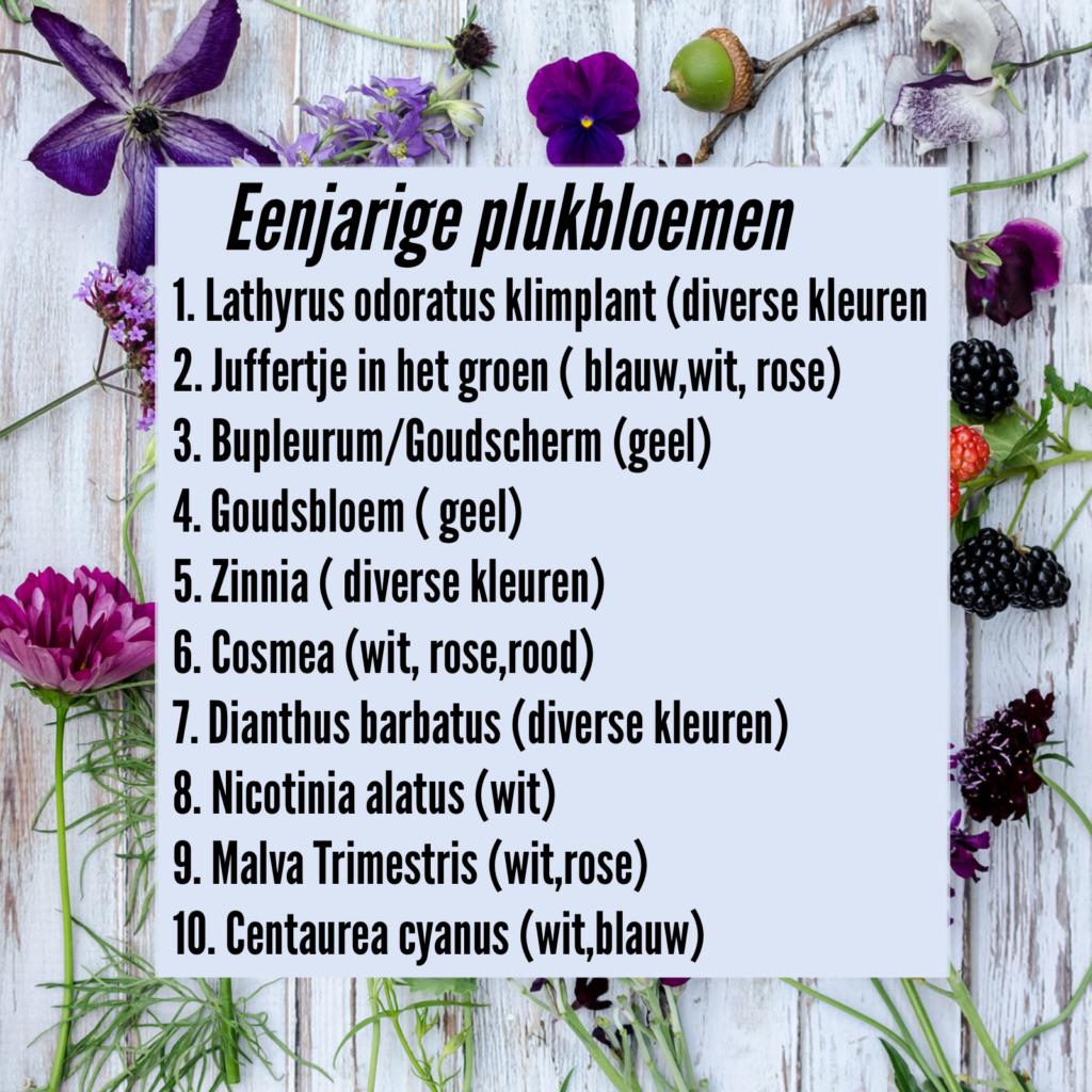 lijst eenjarige plukbloemen